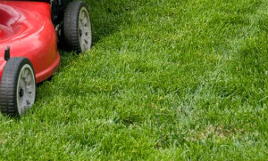 Lawn Mowing Highbury